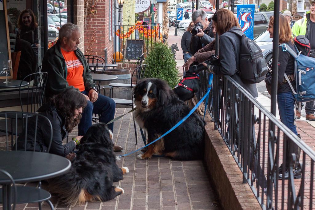 Worldwide Scott Kelby Photowalk -- Occoquan, Virginia -- Very Big Dogs Catch Photographers' Eyes