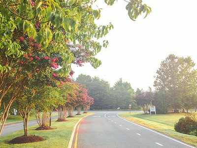 Morning In My Neighborhood