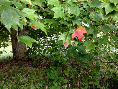 Early Signs of Autumn