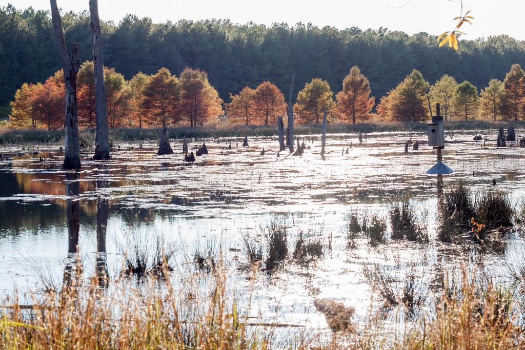 Jones Pond, Caledon