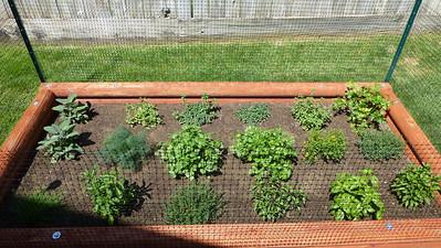 2014/04/29 >> Our Garden (2 weeks)