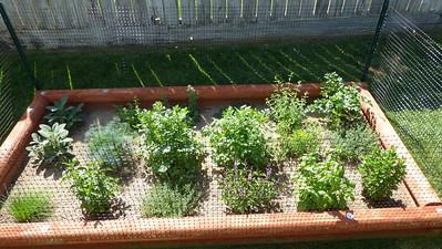 2014/05/07 >> Our Garden (3 weeks)