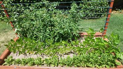 2014/05/28 >> Our Garden (6 weeks)