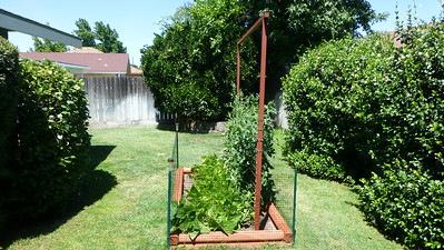 2014/06/17 >> Our Garden (9 weeks)