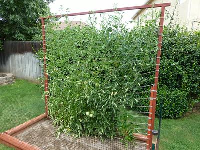 2014/08/04 >> Our Garden (16 weeks)