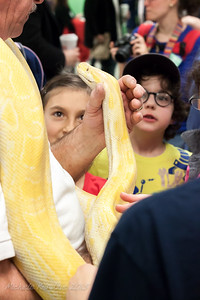 Reptile Adventures Demonstration -- Albino Python