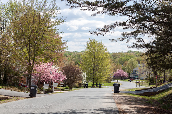 Top of the Neighborhood in Spring