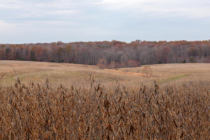 Week 45 {depth} McLaws Trail, Chancellorsville Battlefield