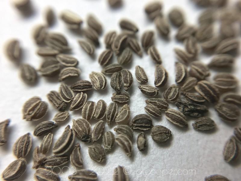 Social Life of Seeds