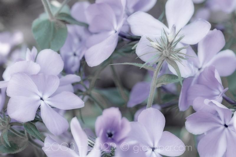 Purple Stillness