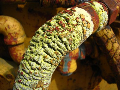 Compound Decay  A rubber hose on a piece of mining equipment at the B.C. Museum of Mining. Obviously some weathering has occurred - I count at least two layers of chipped and peeled paint, plus significant wear and tear and heat-induced weathering on this hose. I haven't any idea what that greenish stuff is though.   More photos from this location elsewhere in my gallery, under Locations.