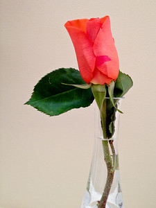 I met Michele 24 years ago today so I gave her a dozen roses. This one stem had a broken stem so it has its own vase.