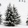 White Christmas (359-366)
