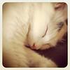 Cat Nap (196-366)