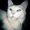 Twilight Kitty (170-366)