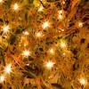 Azalea Lights (363-366)