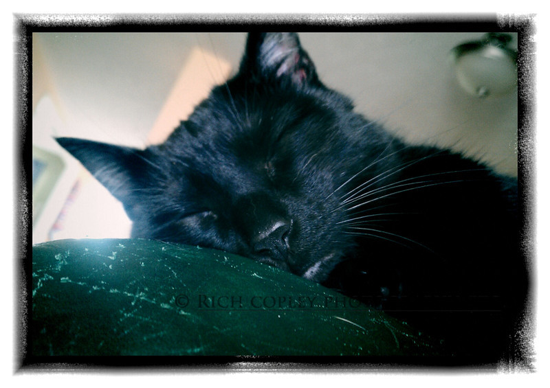 April 29, 2012 - Sunday afternoons were made for cats ... and others who appreciate naps. (136/366)