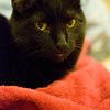 Jan. 13, 2012 - It's Friday the 13th. Here's your black cat. (29/366)