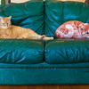 Oct. 25, 2012 - Orange cats. (314/366)