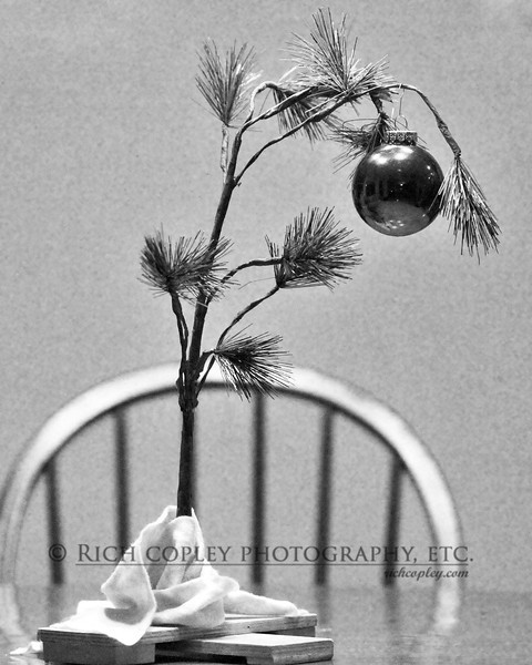 Dec. 15, 2012 - Somehow, the Charlie Brown tree became our kitchen table centerpiece for the holidays. (365/366)
