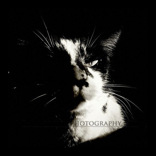 June 14, 2012 - I love what the Holga effect did for this shot of Barbie.