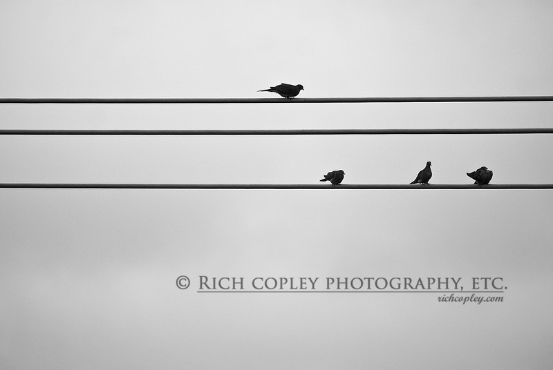 Oct. 1, 2012 - Whenever I see birds gathering on power lines, I think of the PBS commercial with the composer looking for inspiration who sees the birds on the lines and plays what they are lined up as. Alas, I don't think this would sound terribly interesting. (293/366)