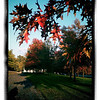 October 15, 2012 - Late afternoon sun firing up the fall color in Thoroughbred Park. (304/366)