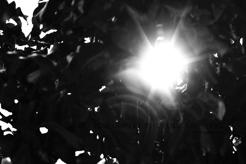 Sept. 13, 2012 - I had been struck by the sight of sun coming through the leaves in the tree in our front yard when I'm getting ready to leave in the morning. (273/366)