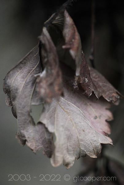 Allure of the Twilight Leaf