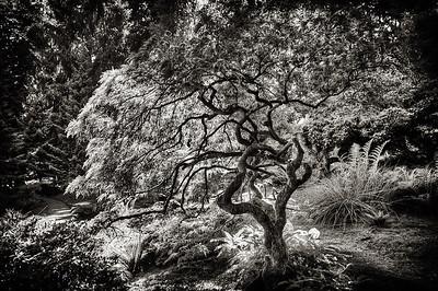 blodel tree-Edit