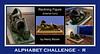 Alphabet Challenge:  R – Reclining Figure