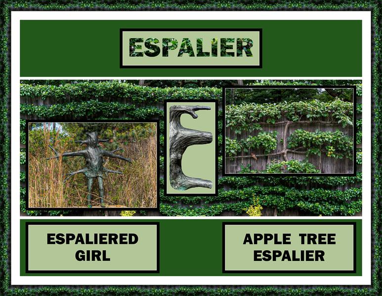 2018 Alphabet Challenge: E - Espalier