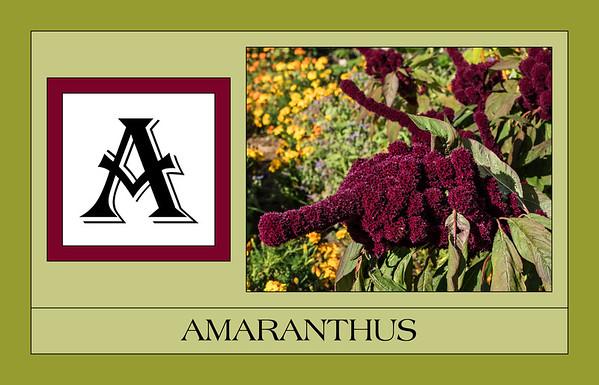 Alphabet in Plant Names