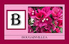 B for Bougainvillea