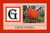 G for Groundsel