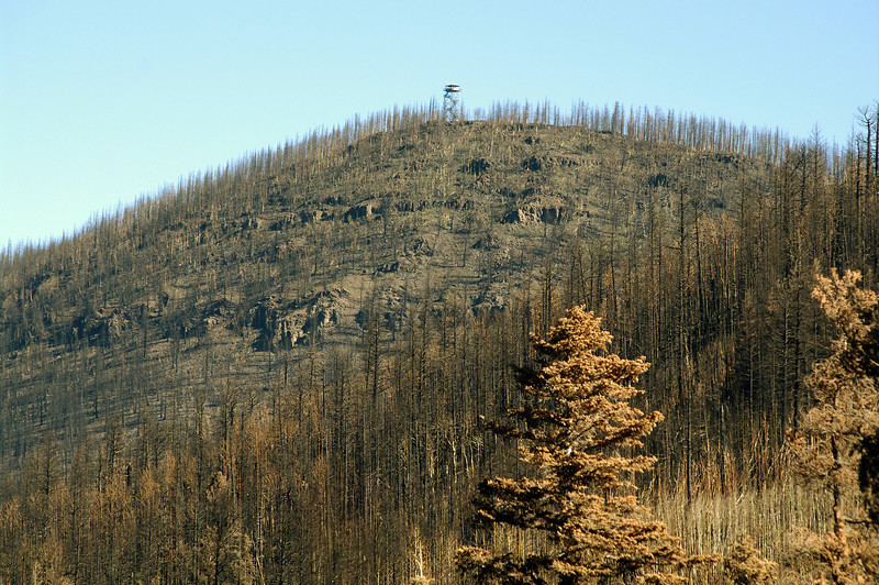 Total burn of Escudilla Mountain, view from the west. Ranger lookout is top of trail. (Oct 2011)