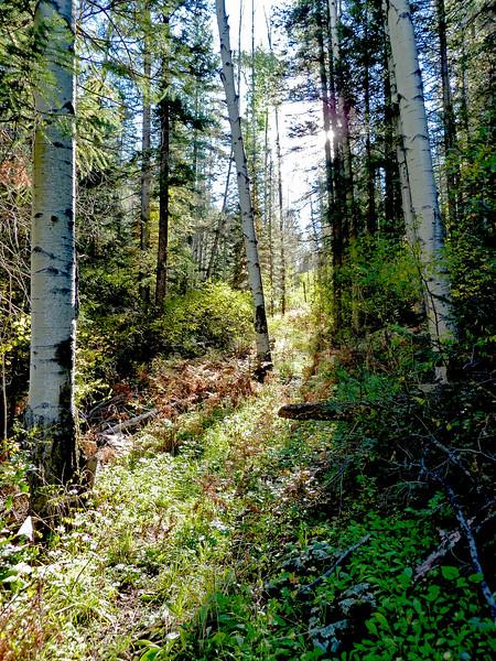 Follow the light. KP Trail below Cienega Campground, Apache National Forest, AZ (Oct 2015)