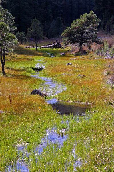 Small runoff creek, Apache National Forest, AZ (Oct 2006)