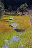 Small runoff creek, Apache National Forest, AZ (Oct 2006)
