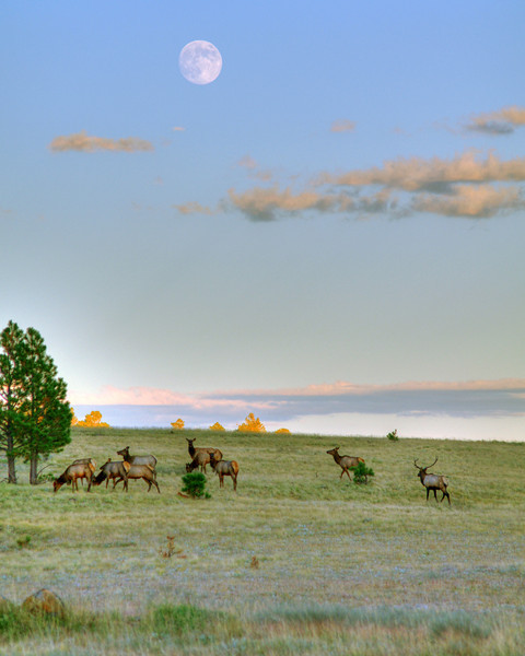 Dinner under the moon, south of Crosby Crossing (Oct 2011, HDR)