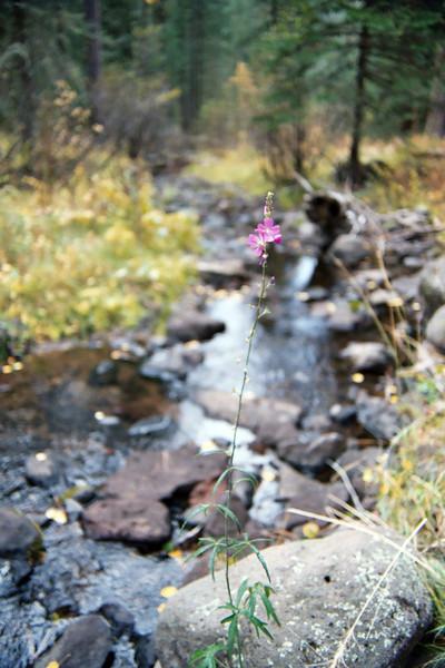 Flora along Bear Wallow Creek (Oct 2004)