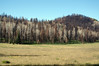 Burn in Williams Valley, aspen and conifers, Apache National Forest, AZ (Oct 2011)