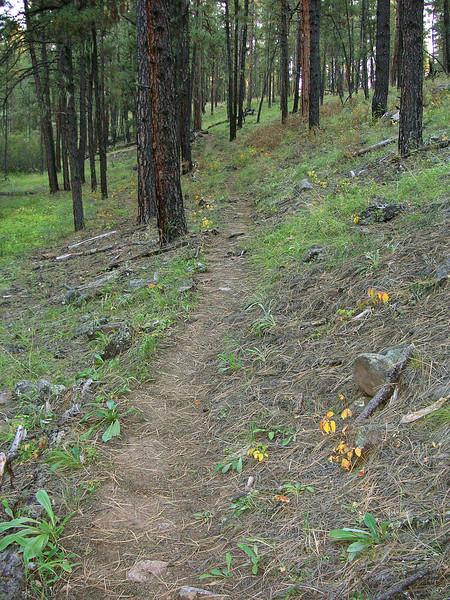 Bear Creek Trail, Apache National Forest, AZ (Oct 2008)