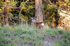 Bambi, near Three Forks Crossing (Oct 2011)