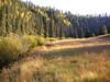 Meadow along East Fork Black River below Three Forks Crossing (Sep 2008)