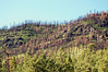 Burned hills along Hwy 191 just north of Alpine, grass from helicopter seeding (Oct 2011)