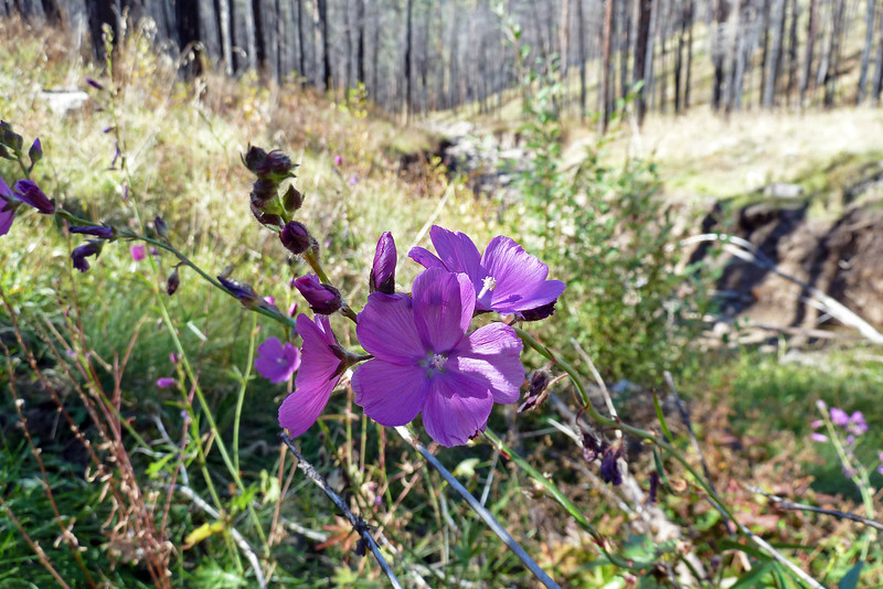 Wildflower along Bear Creek Trail (Oct 2013)