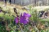 Wildflower along Bear Creek Trail (Oct 2013)