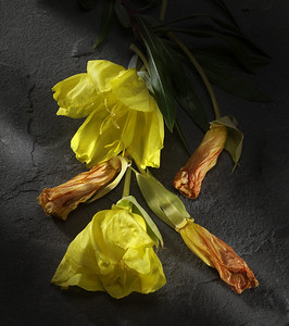 Flowers on black slate.  In studio with Sinar 43h digital back, light photoshop manipulation.
