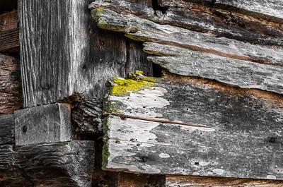 Old Wood Study 31